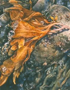 12 Kelp