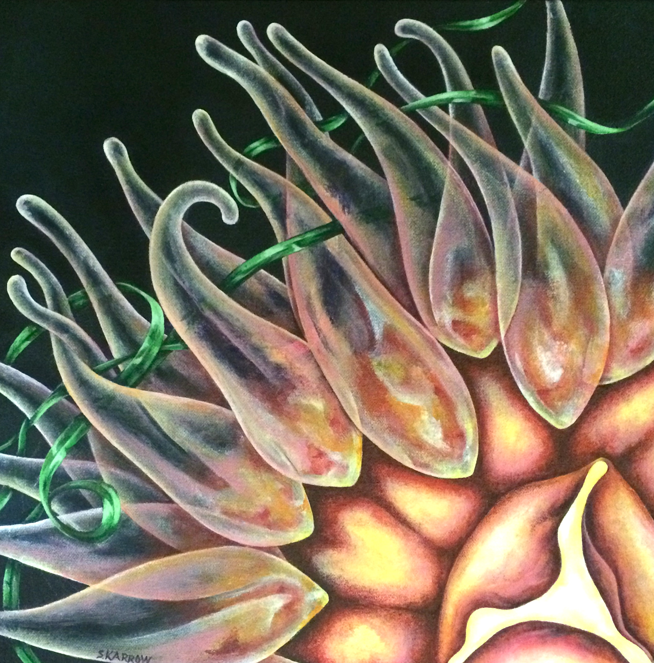 Detail of Nebula Anemone